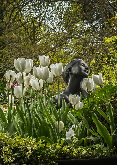 18 DREAMING IN THE TULIPS by Len Kemp