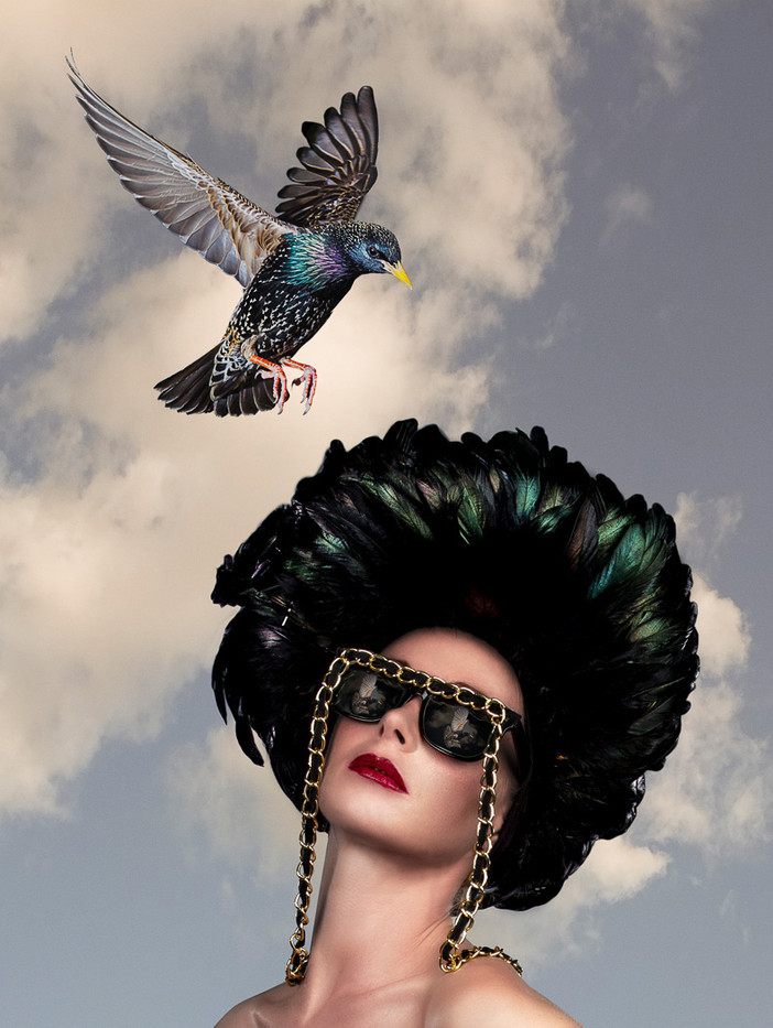 GROUP 1 15 STARLING SEES A HAT by Tony Hill