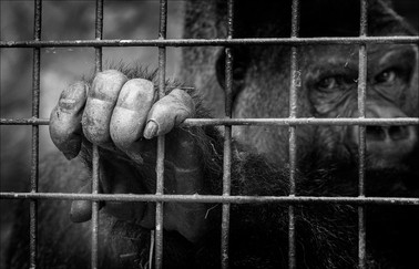 17 CAGED IN by John Butler