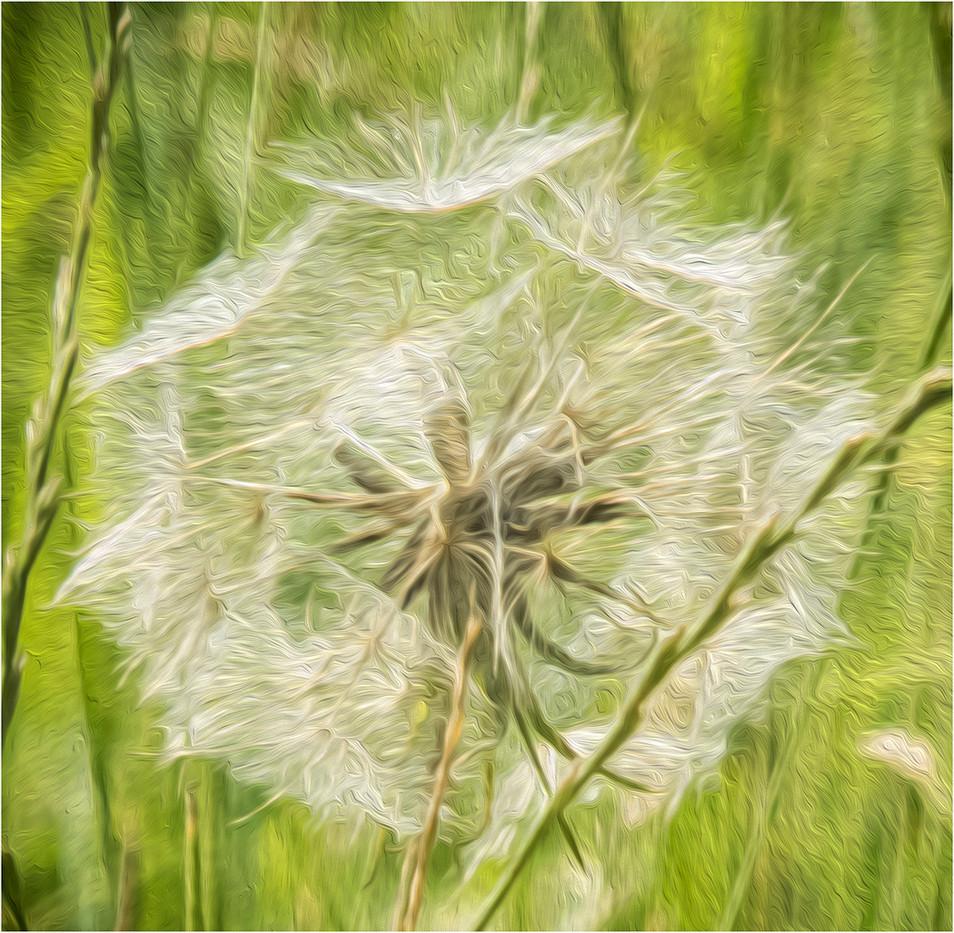 PDI 17 points DANDELION DREAM by Cathie Agates