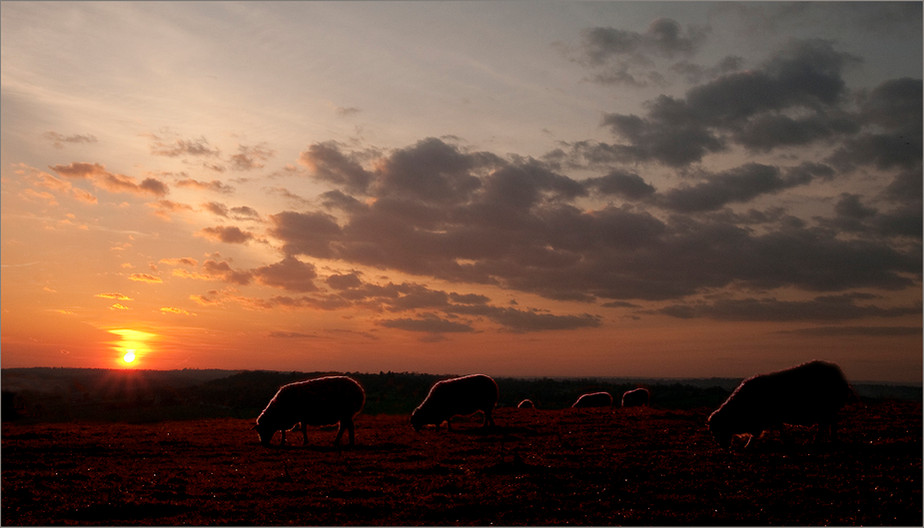17 AND SHEEP MAY SAFELY GRAZE by Jenny Clark