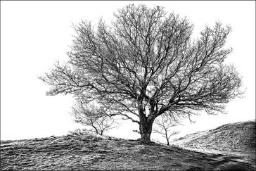 17 TREE by Steve Oakes