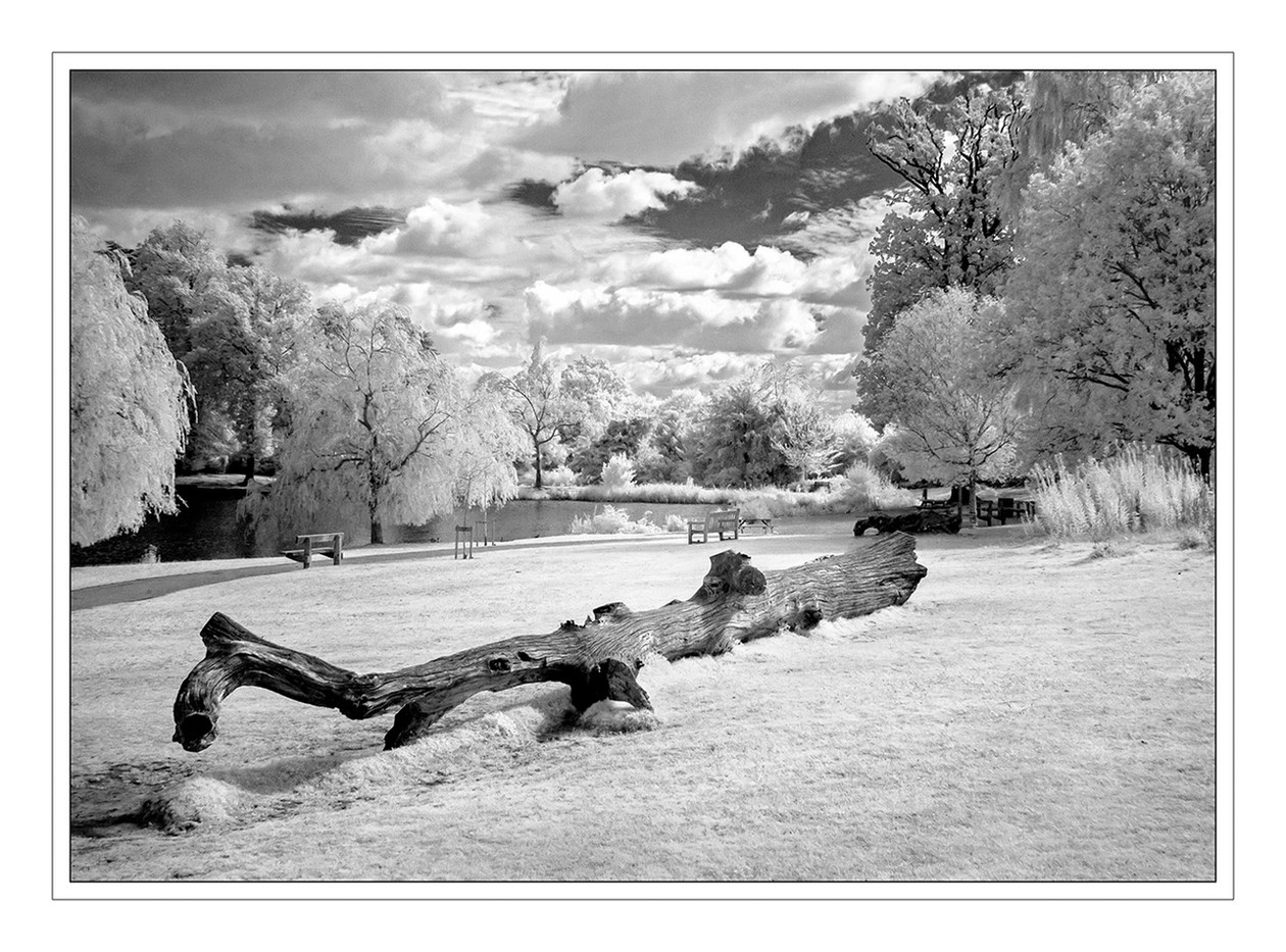 17 DUNORLAN PARK (INFRA-RED) by Mike Shave