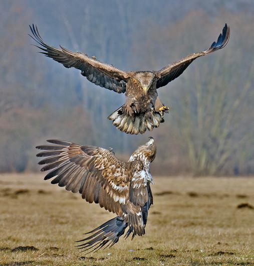 19 EAGLES' AIRBORNE DRAMA by John Hunt