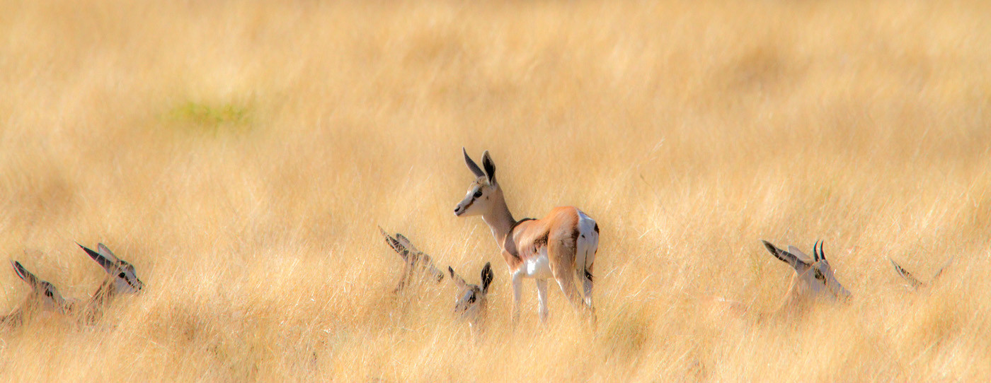 GROUP 1 18 GUARD IN THE LONG GRASS by Peter Tulloch