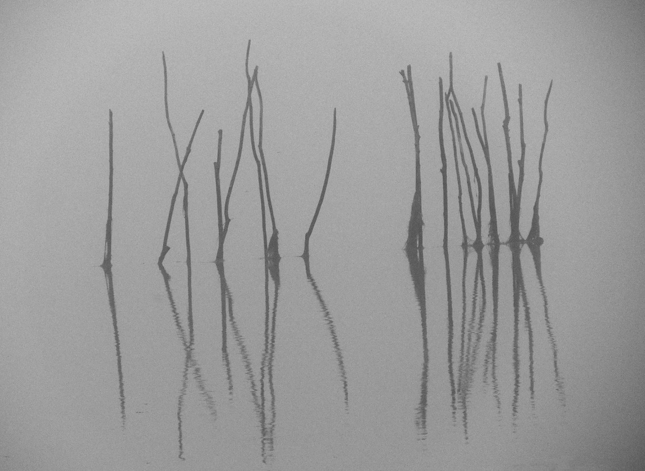 15 SILENT REEDS by Norman Cochrane