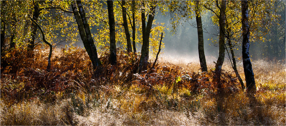 GROUP 1 16 FOREST MORNING by Dave Brooker
