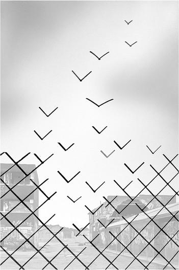 17 BREAK FOR FREEDOM by Jenny Clark