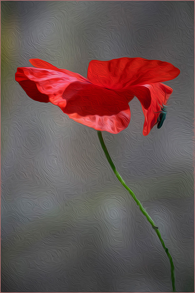 GROUP 1 14 POPPY and VISITOR IN OILS by Mike Shave