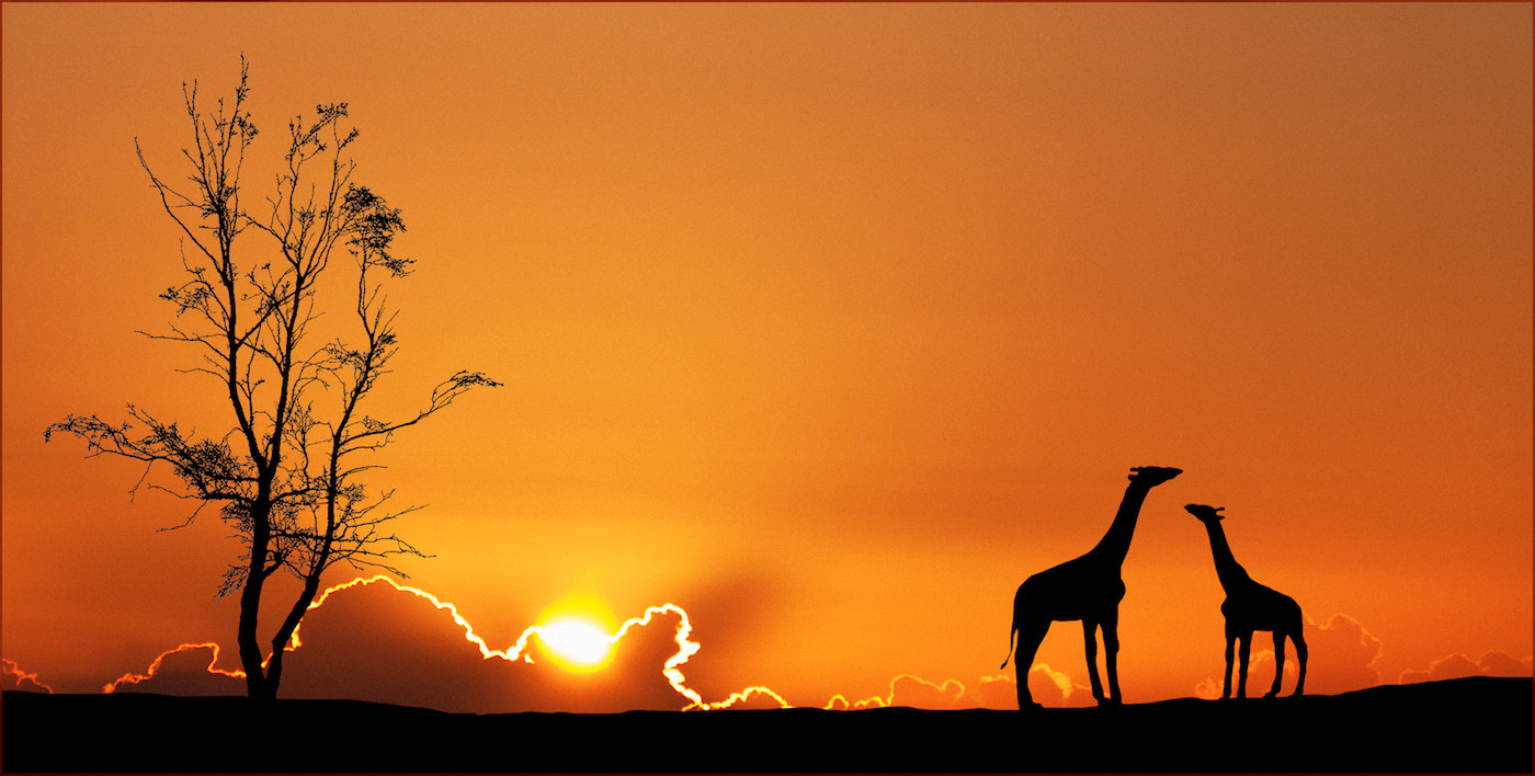 16 SUNSET SILHOUETTES by Carole Lewis