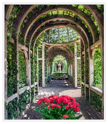PRINT 31 points  3rd PERGOLA VISTA by Mike Shave
