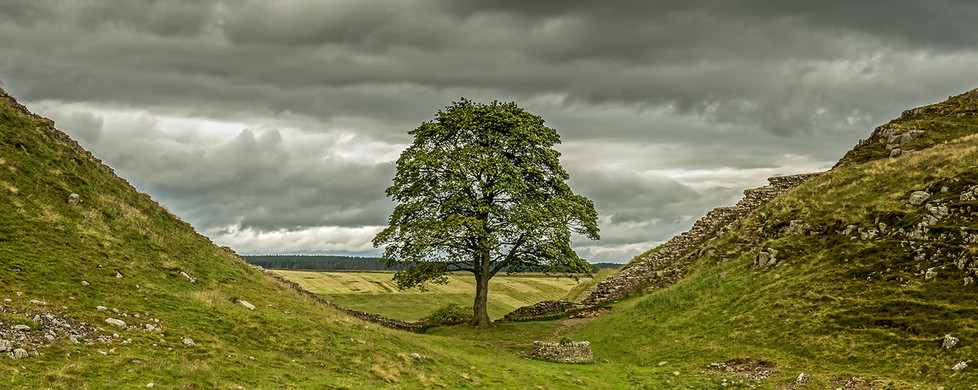 16 SYCAMORE GAP on HADRIAN'S WALL FROM THE SOUTH by Len Kemp