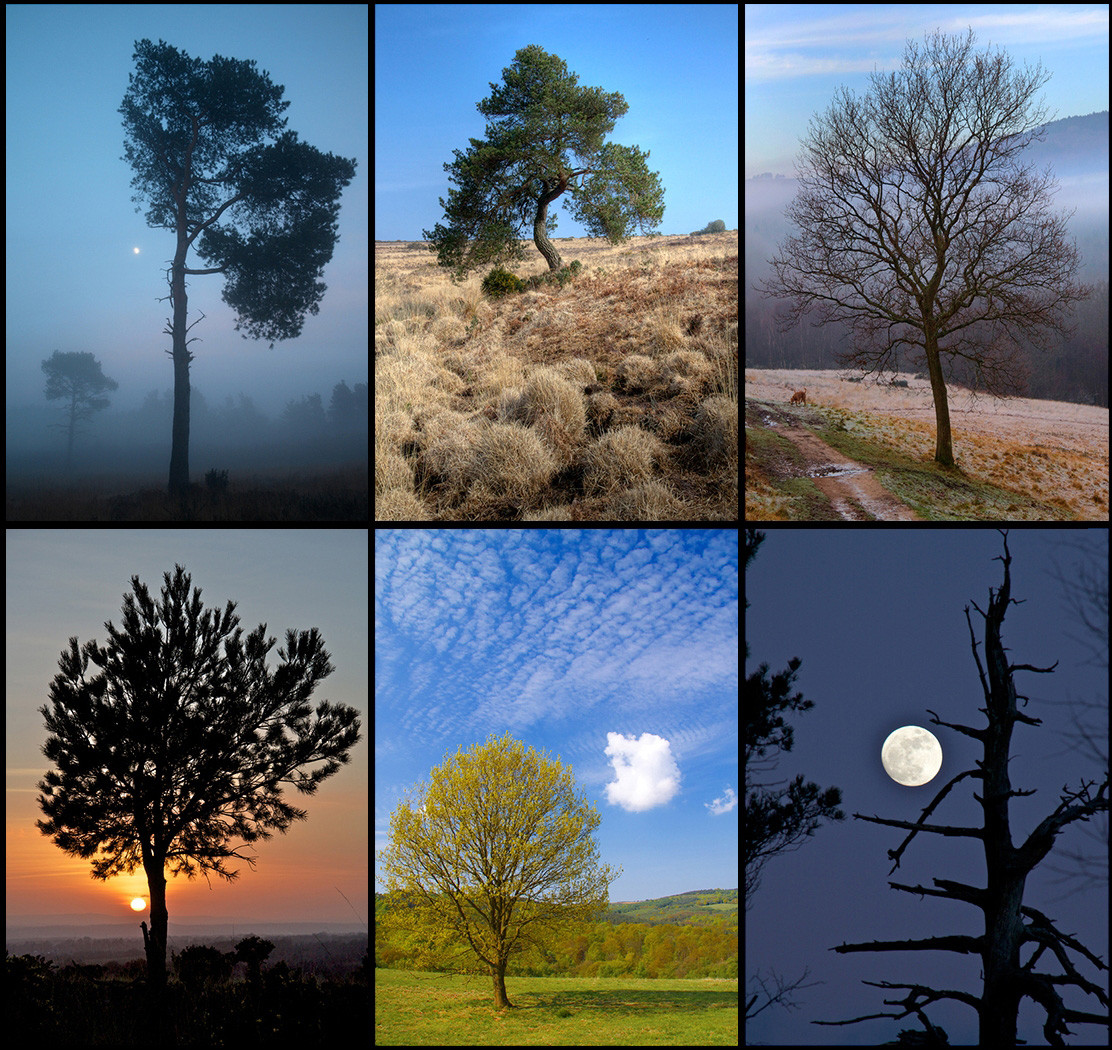 19 TREE by Dave Brooker