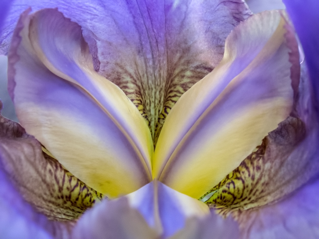 FLOWER ABSTRACT by Pam Sherren