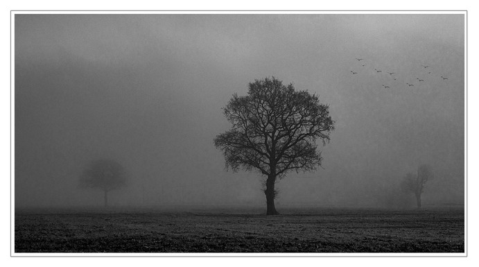 MISTY MORNING by Philip Easom