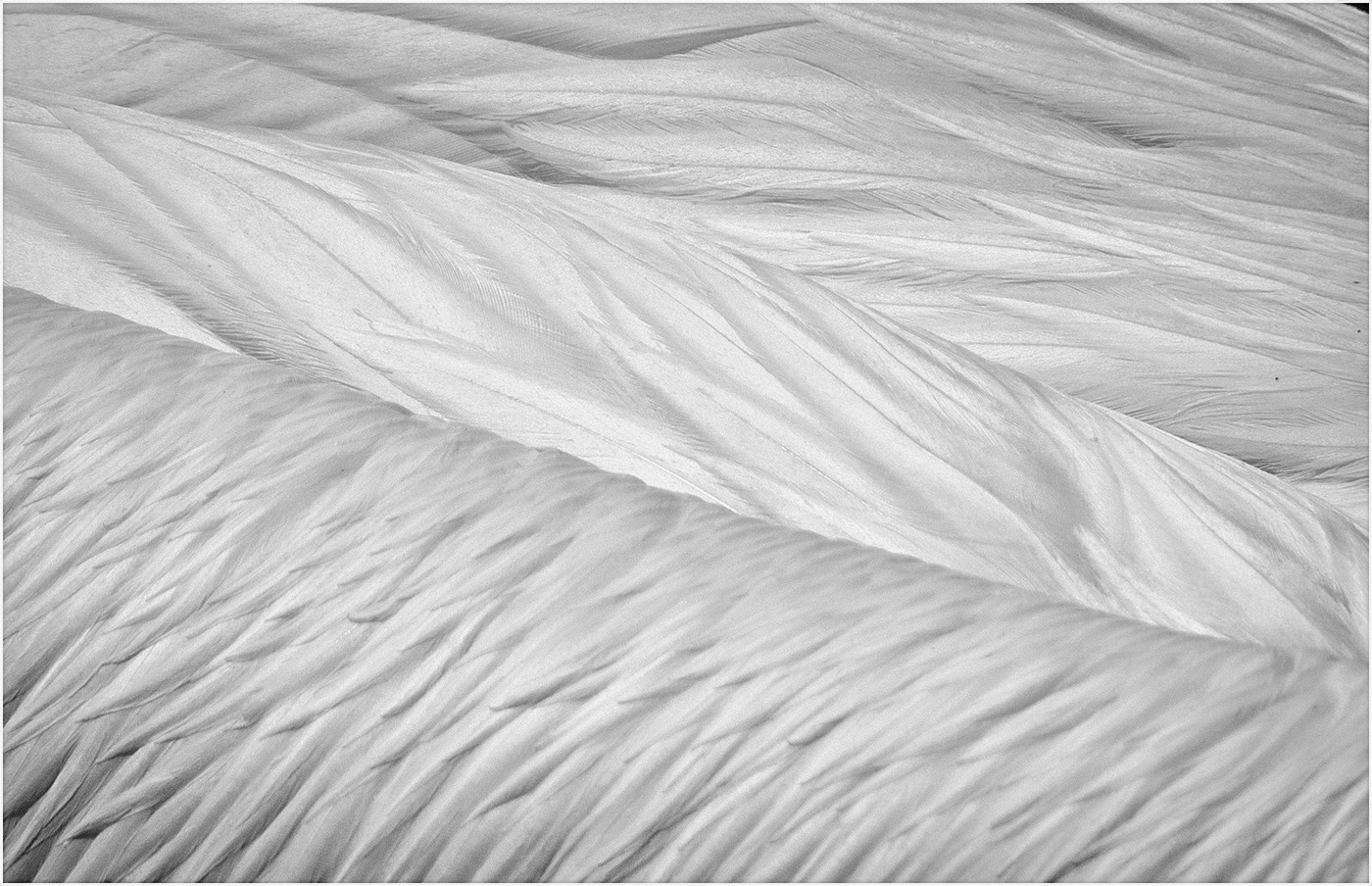 PELICAN FEATHERS by Cathie Agates
