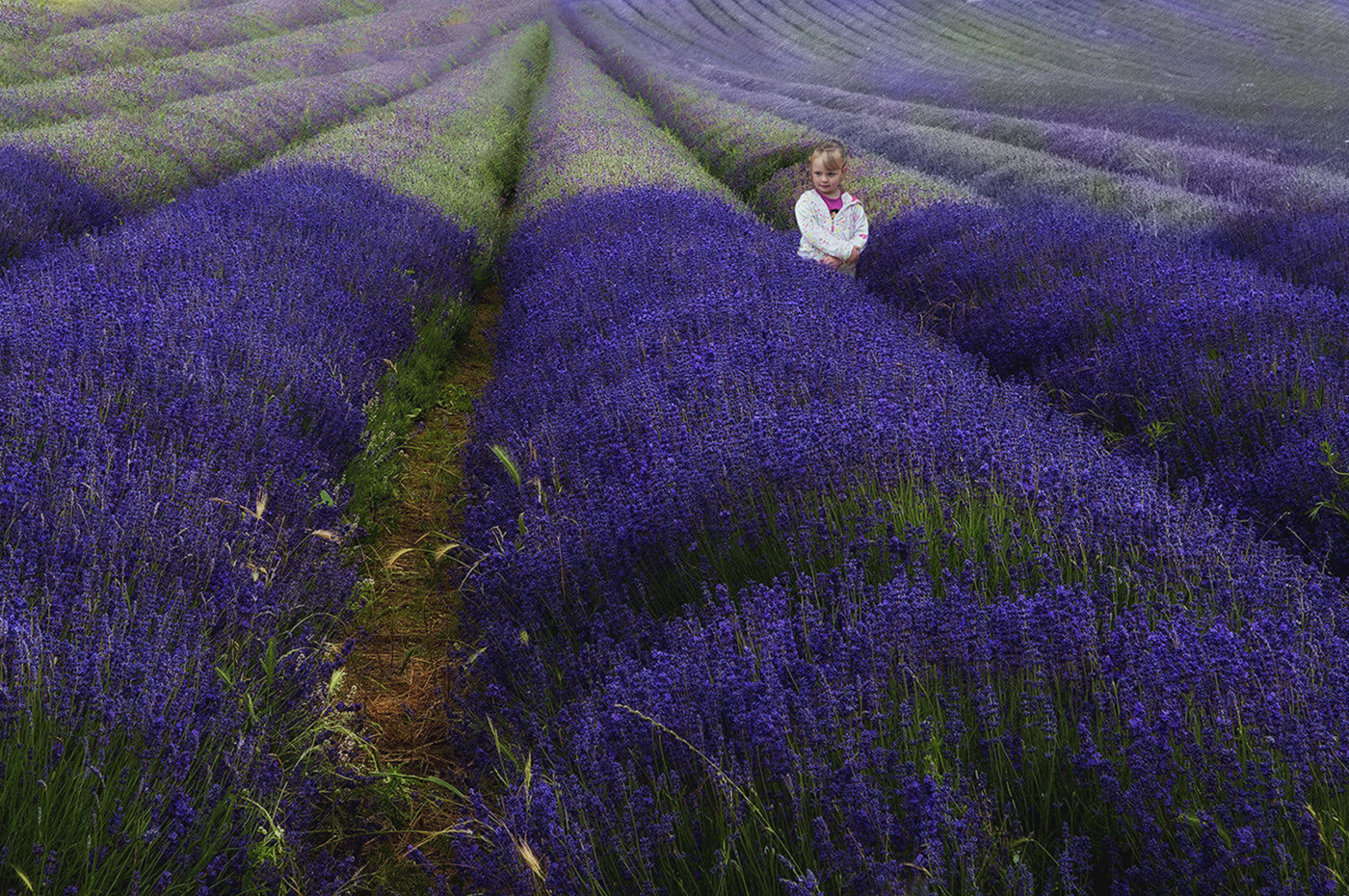 GROUP 1 18 BEAUTY IN THE LAVENDER FIELD by Ann Paine