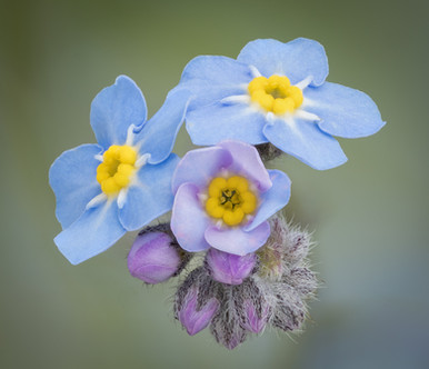 FORGET-ME-NOT by Roger Wates