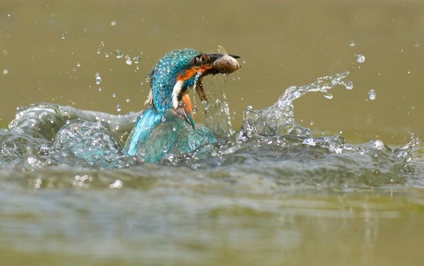 GROUP 1 20 KINGFISHER OUT OF THE DEEP by John Hunt