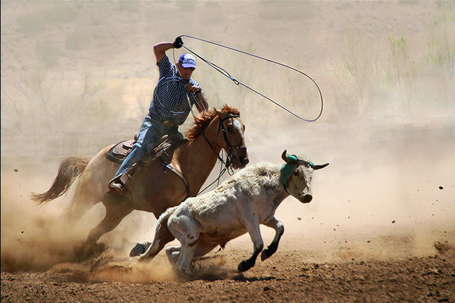 CALF ROPING by Pam Sherren