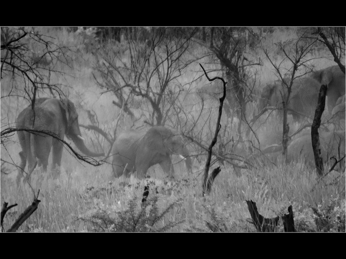 18 ELEPHANTS IN THE MIST by Cathie Agates