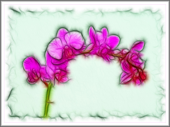 20 ORCHID IMPRESSION by Mick Dudley