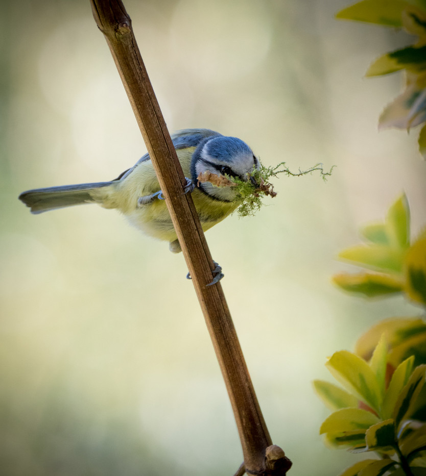 19 NEST BUILDING by Roger Wates