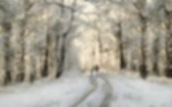 WINTER WALK by Pam Sherren.jpg