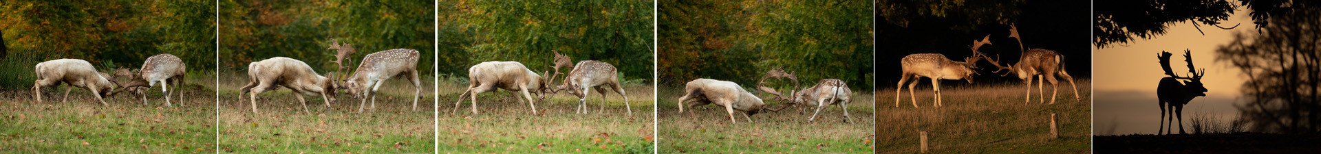 15 THE RUTTING SEASON by Ray Crowle