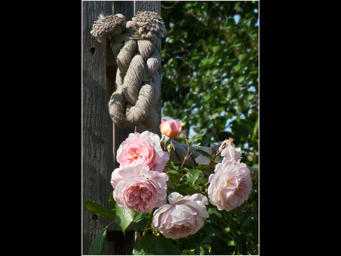 ROBE AND ROSES by Cathie Agates