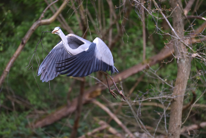 14 HERON NEST BUILDING by Ray Crowle