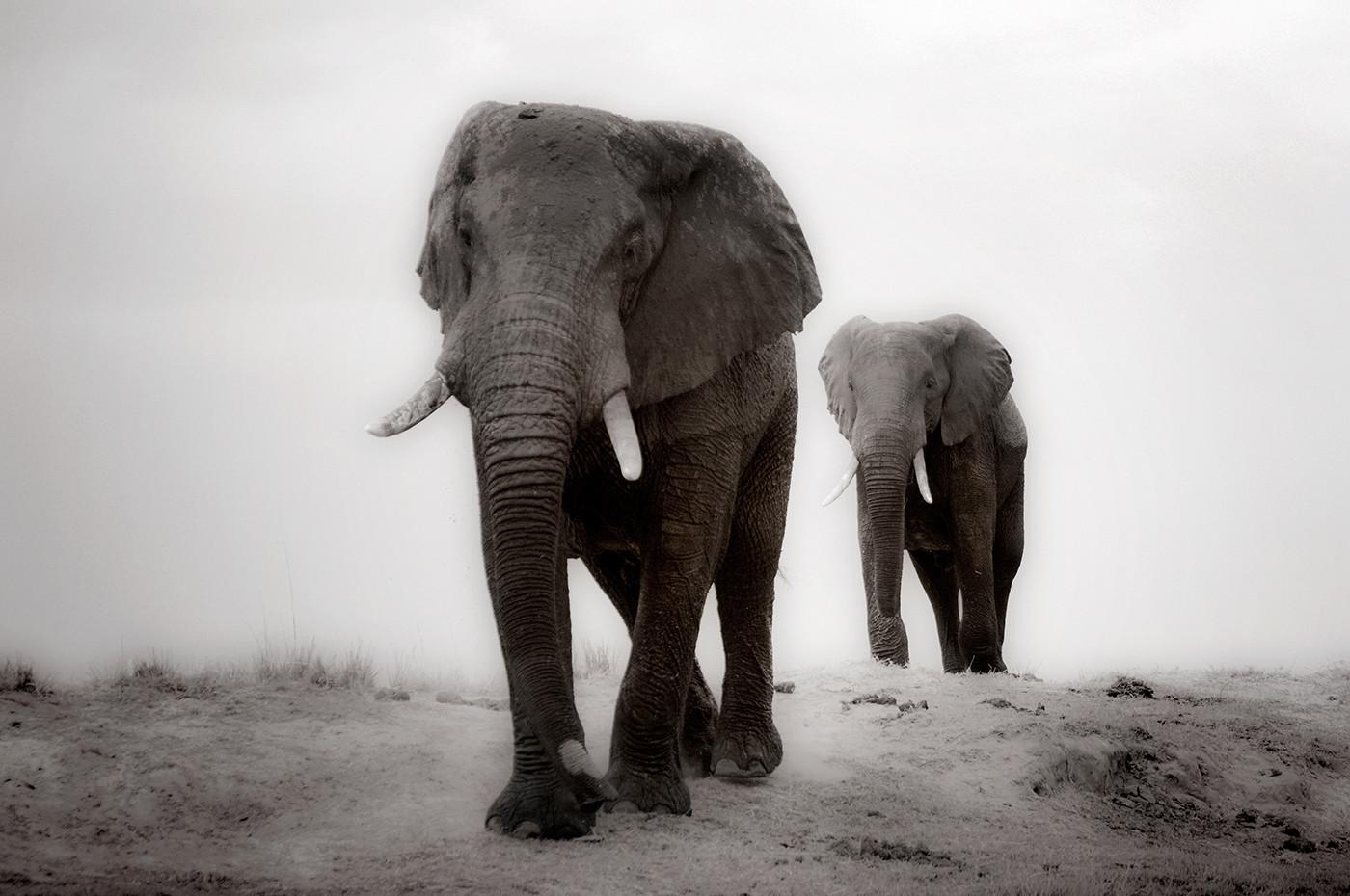 16 TREKKING TOWARDS BOTSWANA by Peter Tulloch