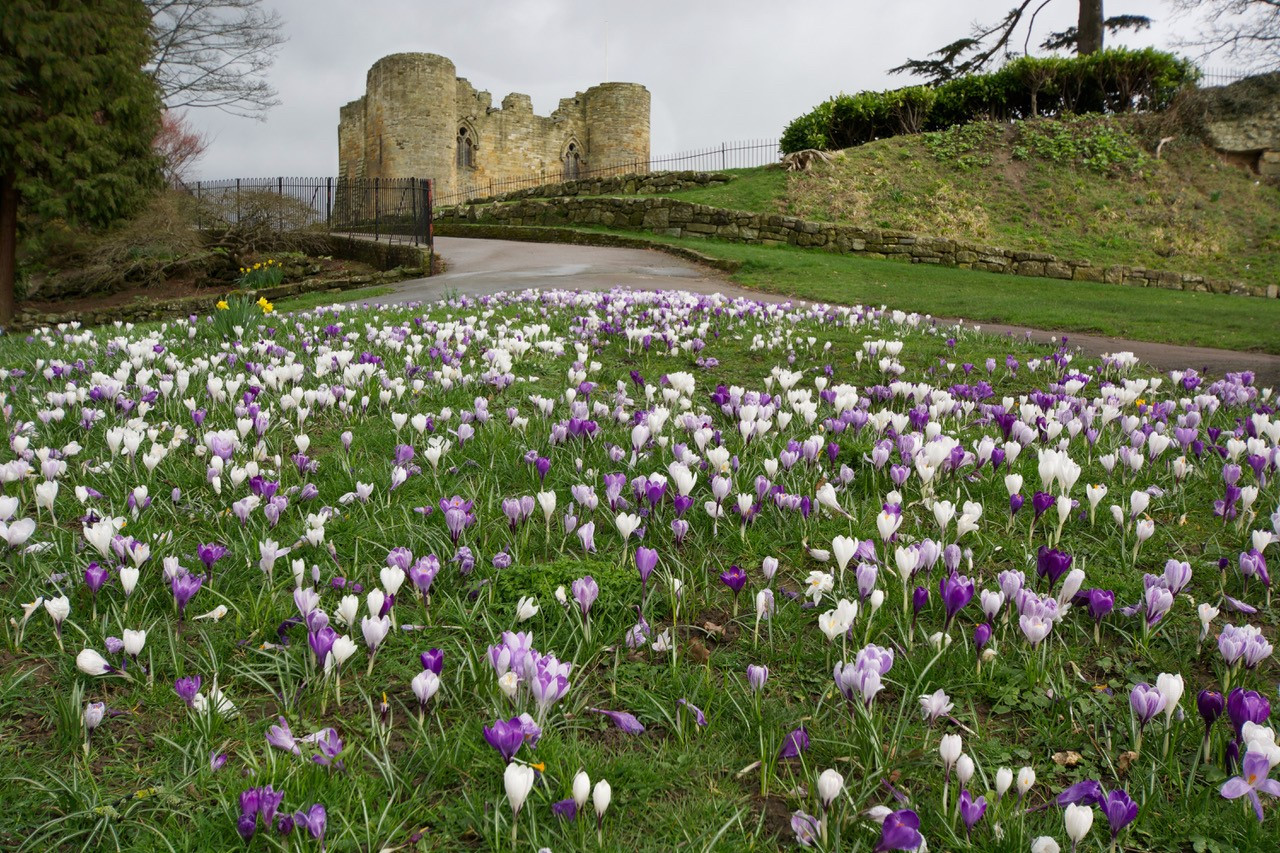 17 CASTLE CROCUSES by Gordon Quinnell