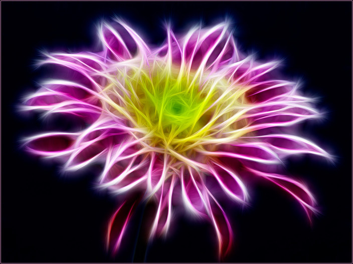 20 NEON CHRYSANT' by Mick Dudley