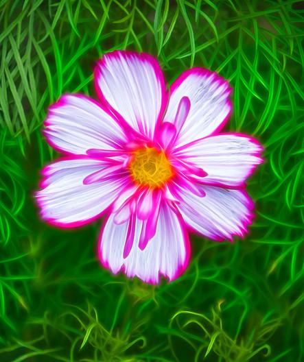19 FLOWER DESIGN by Carole Lewis