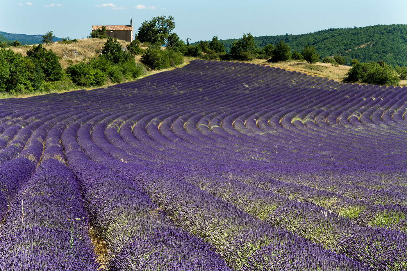 16 LAVENDER FIELD by Cathie Agates