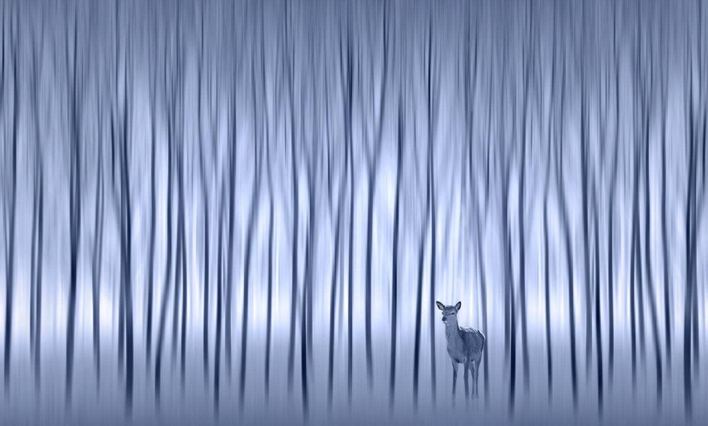 19 MYSTICAL WINTER WOODS by Pam Sherren