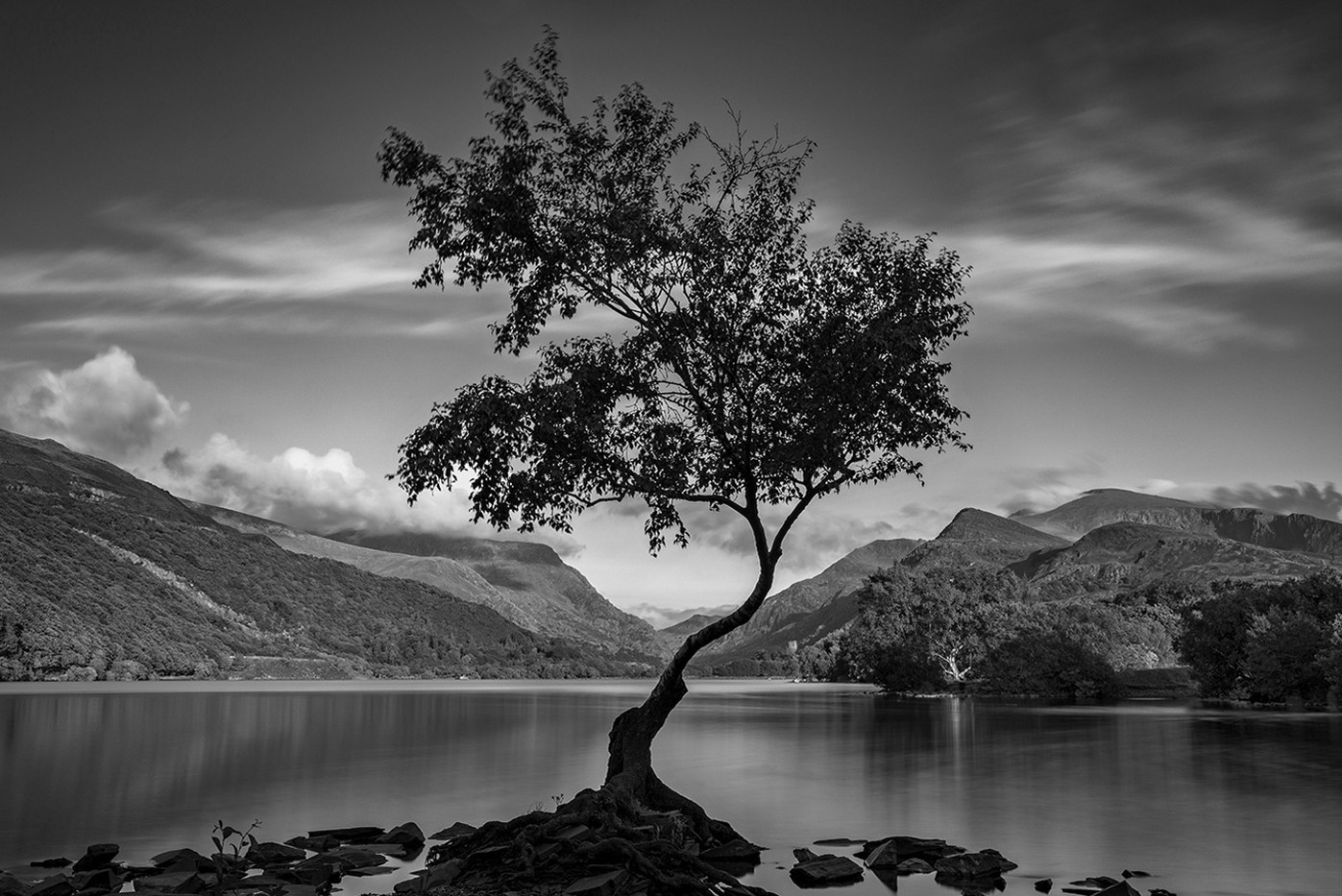 18 LONE TREE by Ann Paine
