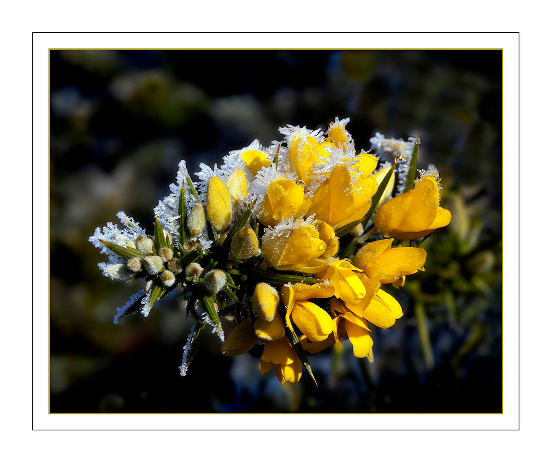 18 A TOUCH OF FROST by Mike Shave