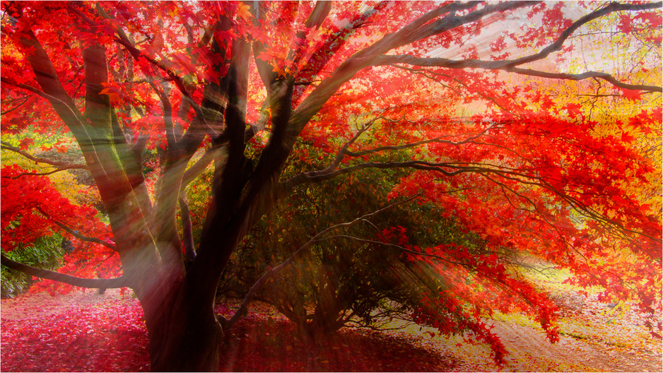 15 AUTUMN COLOUR by Dave Brooker