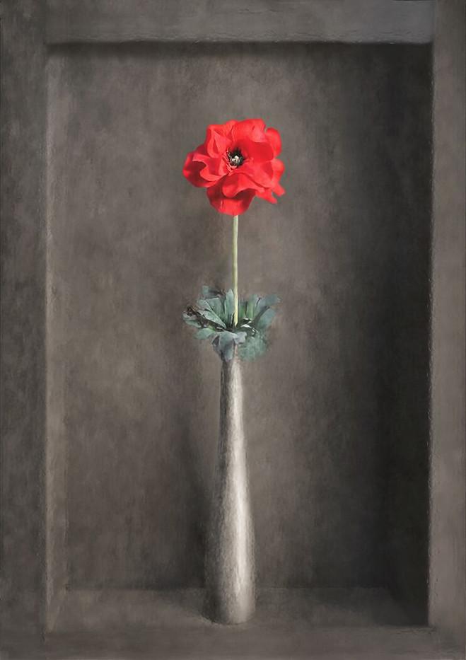 20 ORNAMENTAL POPPY by Pam Sherren