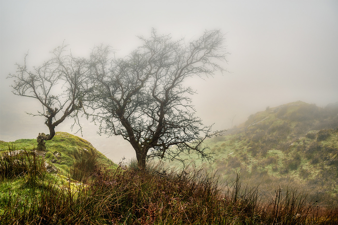 16 A MISTY MORNING IN THE MOUNTAINS by Aann Paine