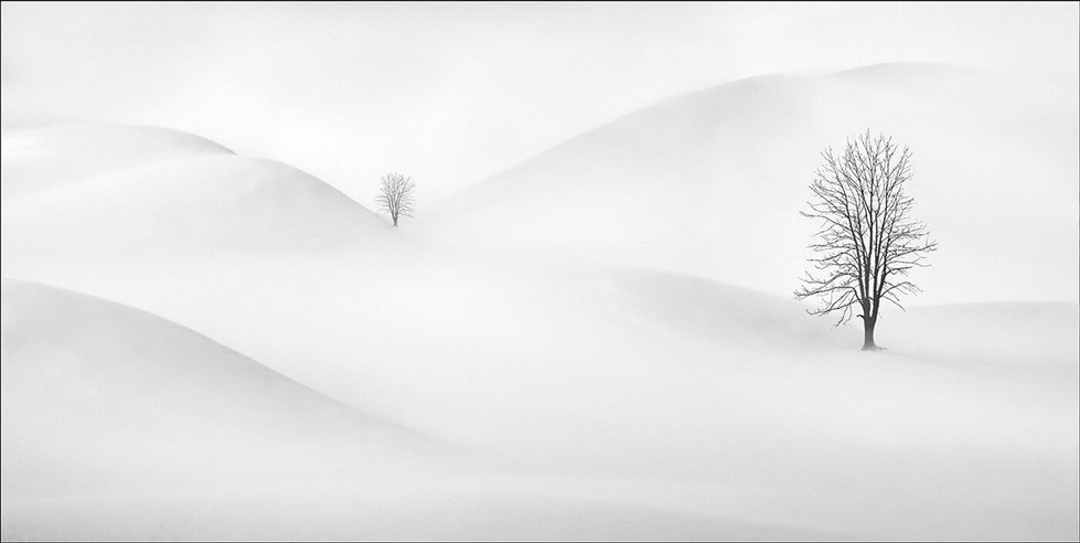 18 TREES IN THE SNOW by Pam Sherren