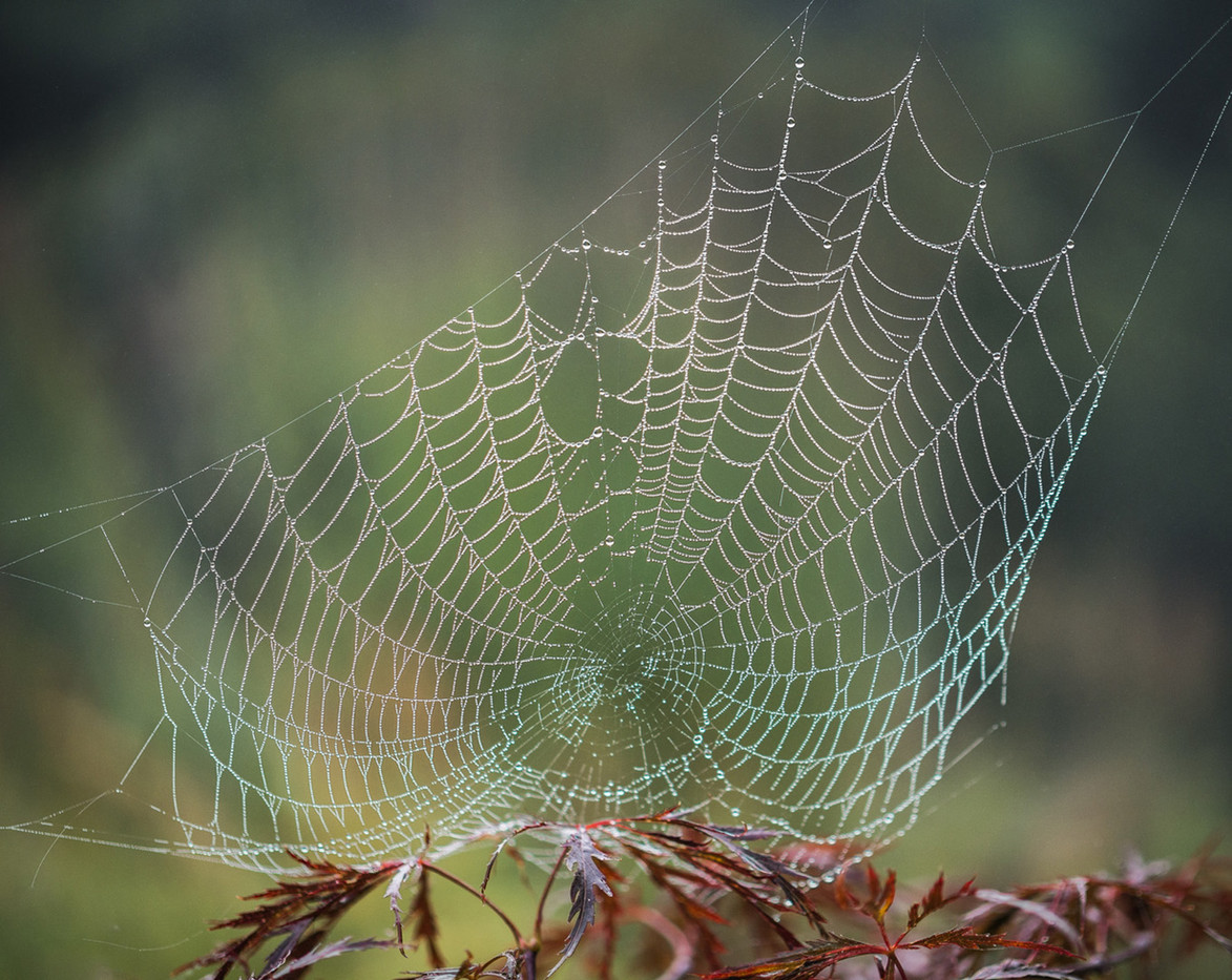 15 SPIDER'S WEB WITH MORNING DEW by Roger Wates