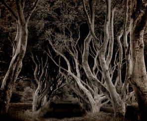16 WITCHES WOOD by Keith Evans