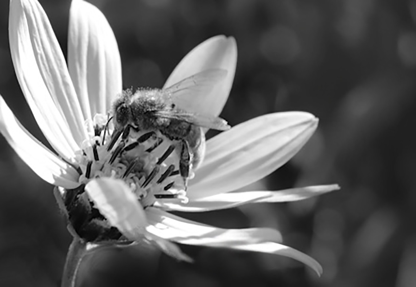 14 BUSY LITTLE BEE by Nicola King