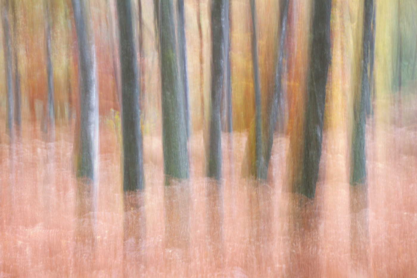 GROUP 1 18 SEA OF TREES by Carole Lewis