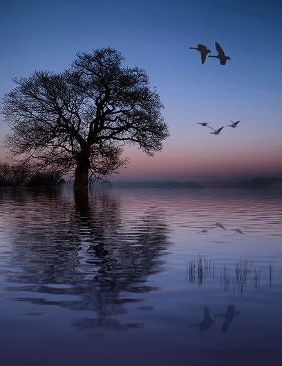19 TRANQUILITY by Ann Paine