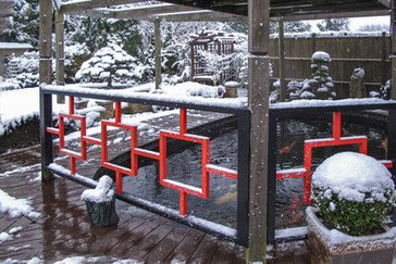 16 IT'S COLD OUTSIDE BUT THE KOI ENJOY THE HEATED WATER by Graham Bunyan