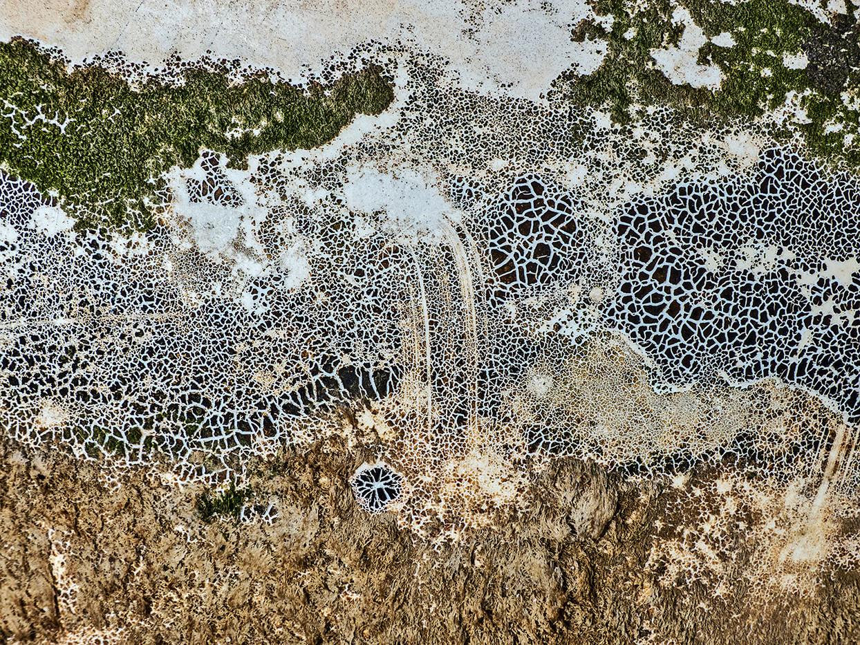 16 ALGAE ON BUOY by Jenny Clark